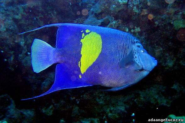 Рыбы красного моря фото и названия в